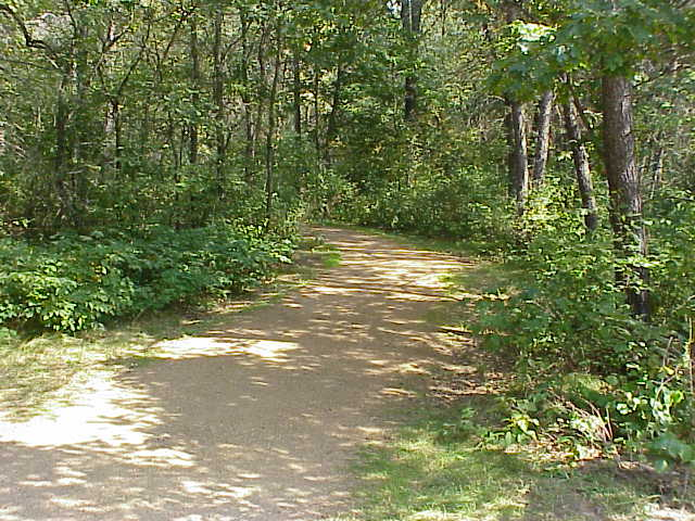 File:Gravel-forest-path.jpg