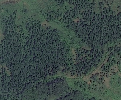 File:Forest example.png