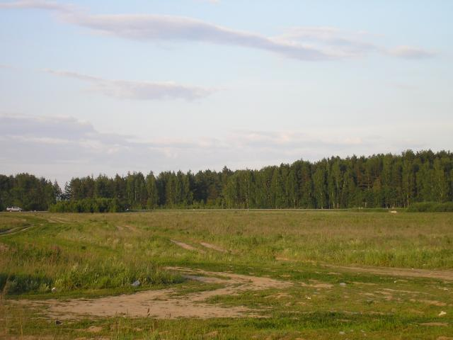 Natural meadow.jpg