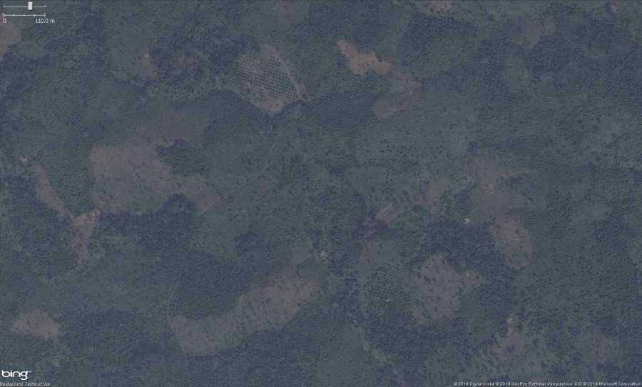 This is the zoomed out view of 2 small palm orchards in West Africa. The main feature to look for, especially zoomed, out is a pattern of very regularly spaced trees. A close look at this photo shows two areas of potential palm orchards. Zooming in will confirm if it is a palm orchard or not. These should get tagged with landuse=orchard. Optionally you can put the species=palm tag on them as well.