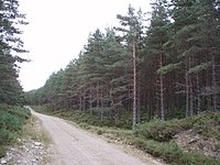 One example for landuse=forest