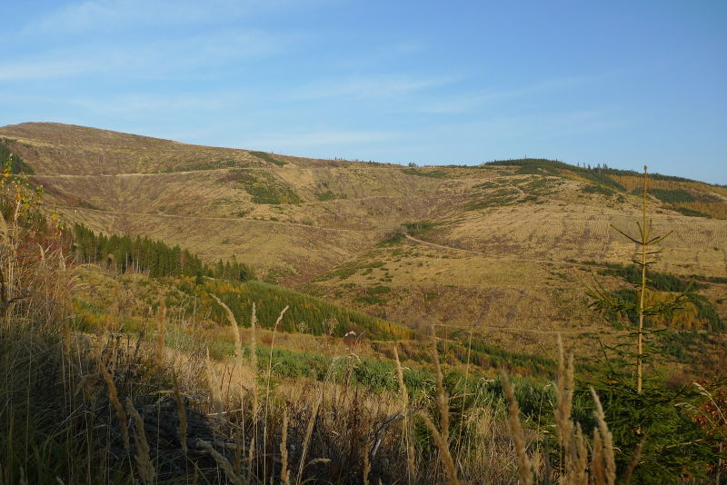 File:Clearcut1.jpg