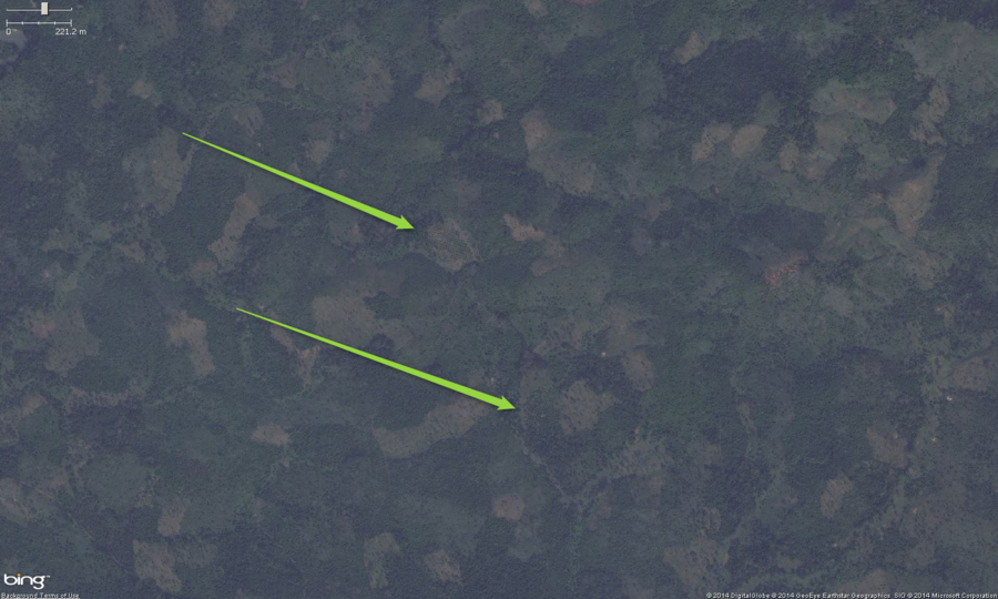 This is the zoomed out view of 2 small palm orchards in West Africa. The main feature to look for, especially zoomed out is a pattern of very regularly spaced trees. Zooming in will confirm if it is a palm orchard or not. These should get tagged with landuse=orchard. Optionally you can put the species=palm tag on them as well.
