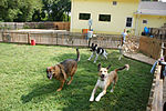 Running in the grass yard@Affectionate Pet Care.JPG