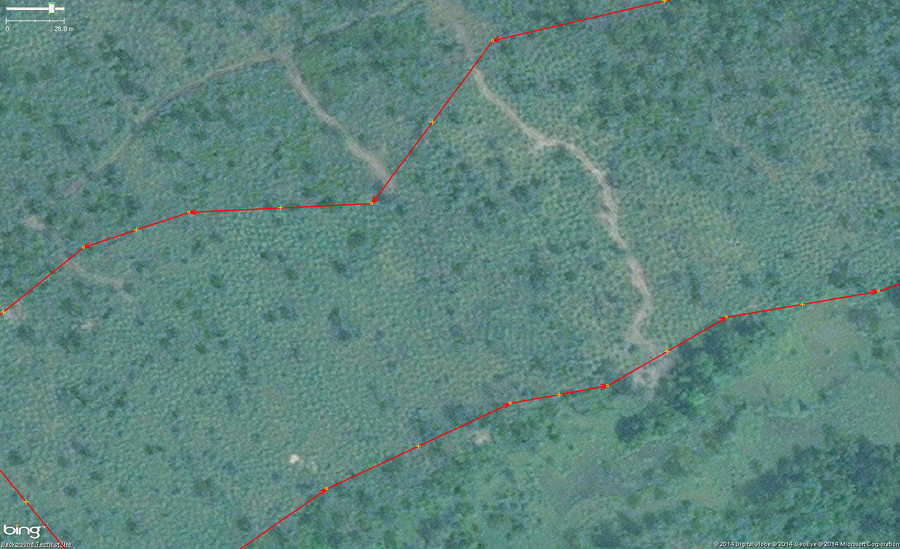 This example of cassava is a field of growing plants mixed in with some trees just to provide another example of how you might see this crop in imagery.