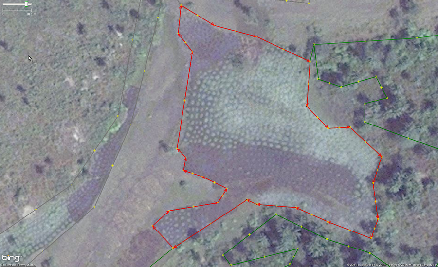 An example of cassava, also known as manioc, cultivation in West Africa. The main identifying feature are the collection of rounded shapes of 1 to 1.5 meters across arranged tightly but irregularly. Green areas are new and growing plants and brown areas are harvested.