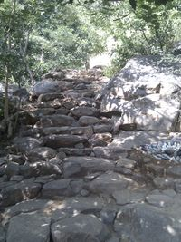 Steps on mountain trail.jpg