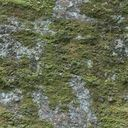 Bare rock with moss.jpg