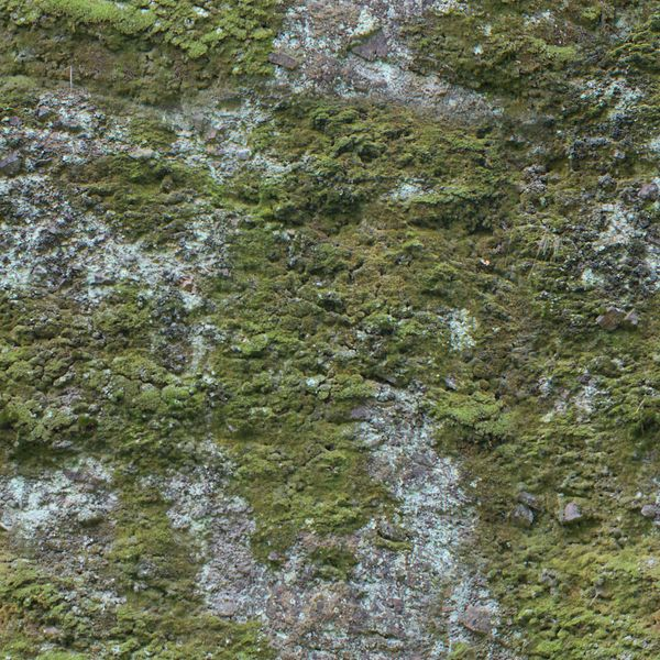 File:Bare rock with moss.jpg