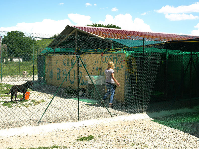 File:Kennel 2.jpg