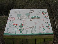 Nature Board by pupils of Longniddry Primary School - geograph.org.uk - 1773655.jpg