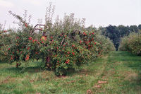 One example for landuse=orchard