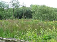 Beeston Marsh, Attenborough Nature Reserve.jpg