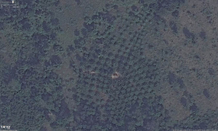 "This is the zoomed in view of the southern orchard from the above images. You can see the very regular rows, well spaced placement of trees. Also note, these trees have a very distinctive ""star"" shape to their leaves, this is one of the indicators the crop is palm. These should get tagged with landuse=orchard. Optionally you can put the species=palm tag on them as well."