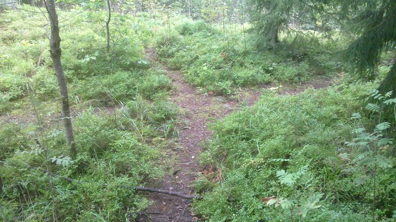 File:Trail-Example-Little-Forest-Trails.jpg