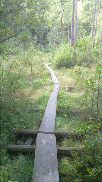 File:Trail-Example-Duckboards-over-wetland.jpg
